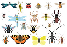 Insect Collection, Illustratio...