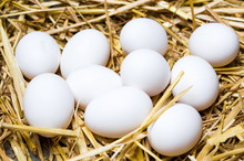 White Eggs On Dried Straw