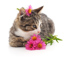 Cat And Flowers.