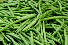 Healthy And Benefits With Bush Beans.Green Beans In The Market  With Full Frame.