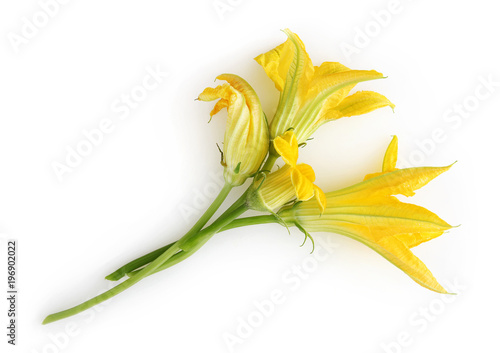 zucchini flowers isolated on white background