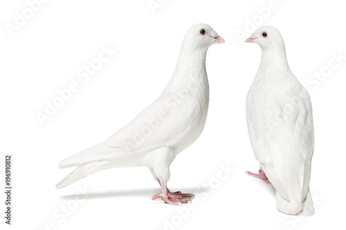 Pair of doves isolated on white