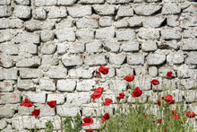 Deteriorating Brick Wall Painted And Poppy Flowers