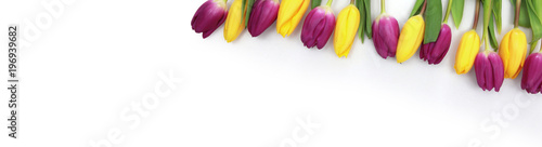 Wunderschöne Tulpe