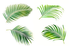 Set Of Palm Leaves Isolated On White Background.