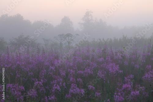 Fotobehang Landschap willow-herb