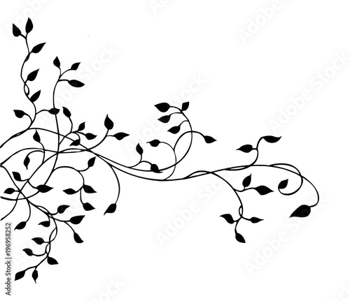 ivy vine vector design element, pretty leaves in elegant hand drawn illustration Canvas Print