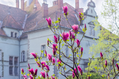 Photo  Flowering Mulan magnolia on blurred background of the old castle