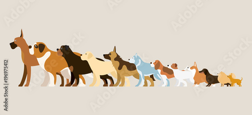 Photo Group of Dog Breeds Illustration, Side View Arranged in Height Order