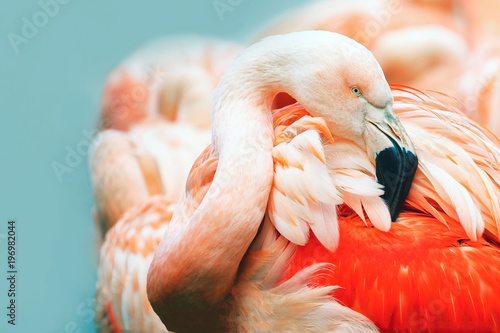 Spoed Foto op Canvas Flamingo Pink Flamingo head in profile. Turquoise background. Place for text