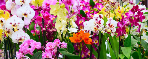 Fotografie, Tablou Variety of many different orchid flowers banner background