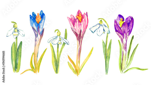 Spoed Foto op Canvas Iris Set of blue, pink and purple crocus flowers and snowdrops, isolated hand painted watercolor illustration