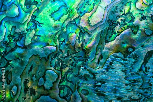 New Zealand paua shell (Haliotis Iris) close up as a luxury background Wallpaper Mural