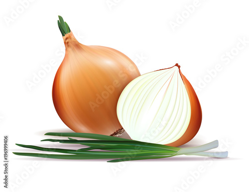 Fototapeta Vector fresh whole and sliced yellow onion bulbs with green onions close up isolated on white background obraz