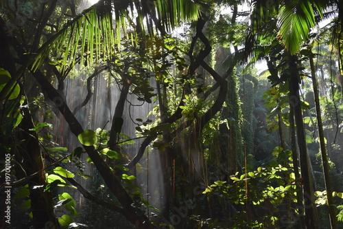 Photo sur Toile Gris traffic Forêt tropicale