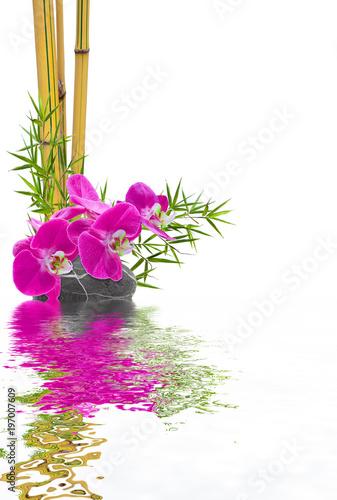 Valokuvatapetti bambou orchidée galet avec reflets