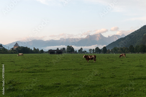 Fotobehang Wit brown cow in front of mountain landscape