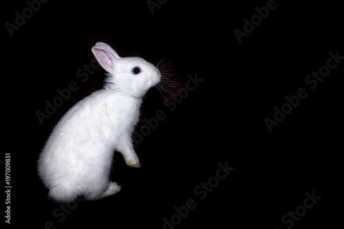 Rabbit black white paws picture — photo 3