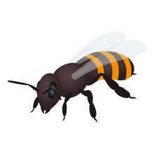 Bee Icon. Isometric Illustration Of Bee Vector Icon For Web