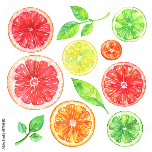 Hand painted citrus fruits set. Watercolor grapefruit, orange, lemon, kumquat, lime and green leafs on white background Fototapete