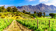 canvas print picture - Vineyards of the Cape Winelands in the Franschhoek Valley in the Western Cape of South Africa, amidst the surrounding Drakenstein mountains