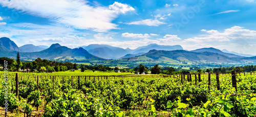 Poster Afrique Vineyards of the Cape Winelands in the Franschhoek Valley in the Western Cape of South Africa, amidst the surrounding Drakenstein mountains