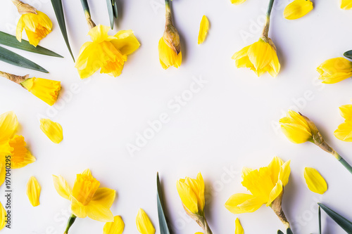 Yellow flowers on a white background. Copy space. Flat lay.