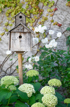 Old Wooden Birdhouse, White Hy...
