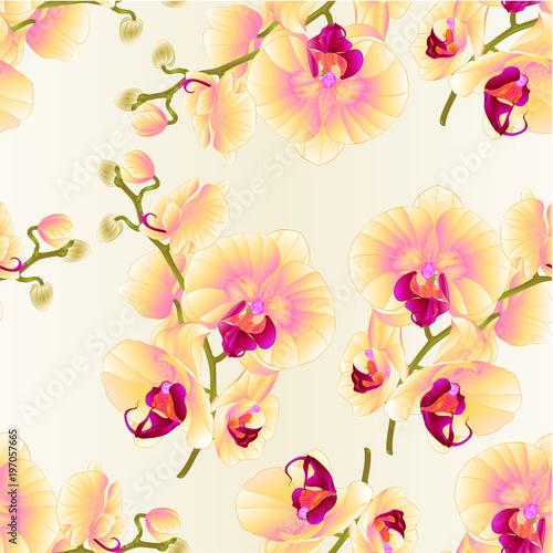 bezszwowych-tekstur-galaz-orchidei-zoltych-kwiatow-phalaenopsis-tropikalna-roslina-na-bialej-tlo-rocznika-botanicznej-ilustraci