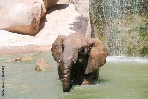 Photo Elephant looking abreast