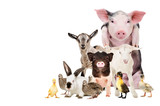 Fototapeta Zwierzęta - Group of cute farm animals together, isolated on white background