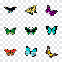 Set Of Butterfly Realistic Sym...