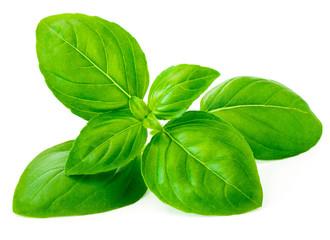 Basil leaf isolated on white background, macro