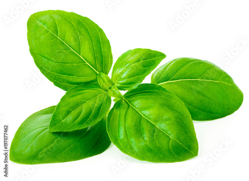 Basil leaf isolated on white background, macro