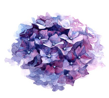Watercolor Illustration Of Pur...