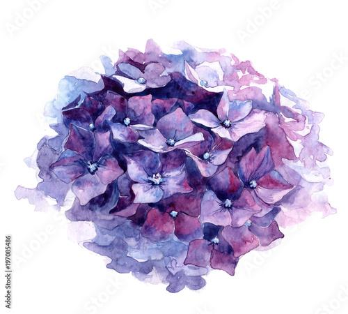 Fotografie, Tablou Watercolor illustration of purple hydrangea.