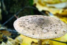 Umbrella Mushroom Hat