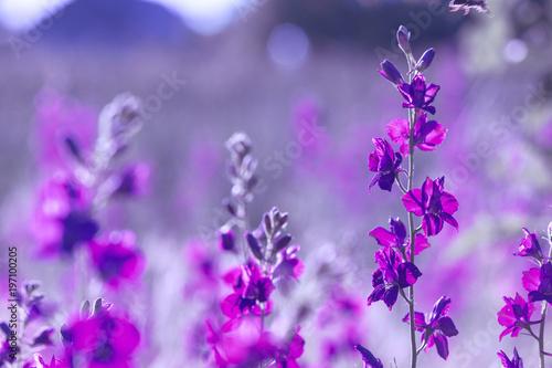 Spoed Fotobehang Lavendel purple wild flowers