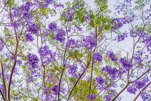 Spoed Fotobehang Purper Purple Flowers on a Cloudy Day