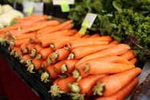 Fresh Organic Carrots At A Far...