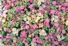 Flowers Wallpapers Image. Beautiful Decorative Bouquet Of Pink, Peach, Yellow And Cream Colored Roses, Esters, Daisies And Hydrangea On A Large Wall Or Ceiling.
