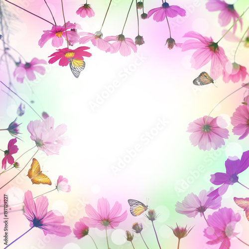 Keuken foto achterwand Bloemen pink cosmos flower and butterfly in the meadow