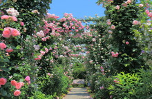 Rose Garden Flower Arcade And ...