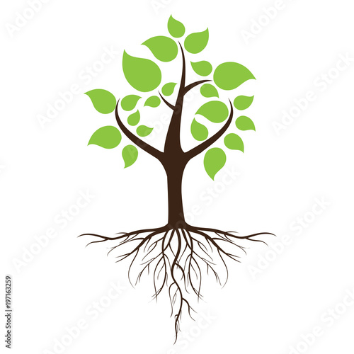 Green leafy tree with roots With trees isolated from white background Poster