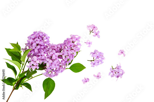 Spoed Foto op Canvas Lilac lilac flower on old wooden background