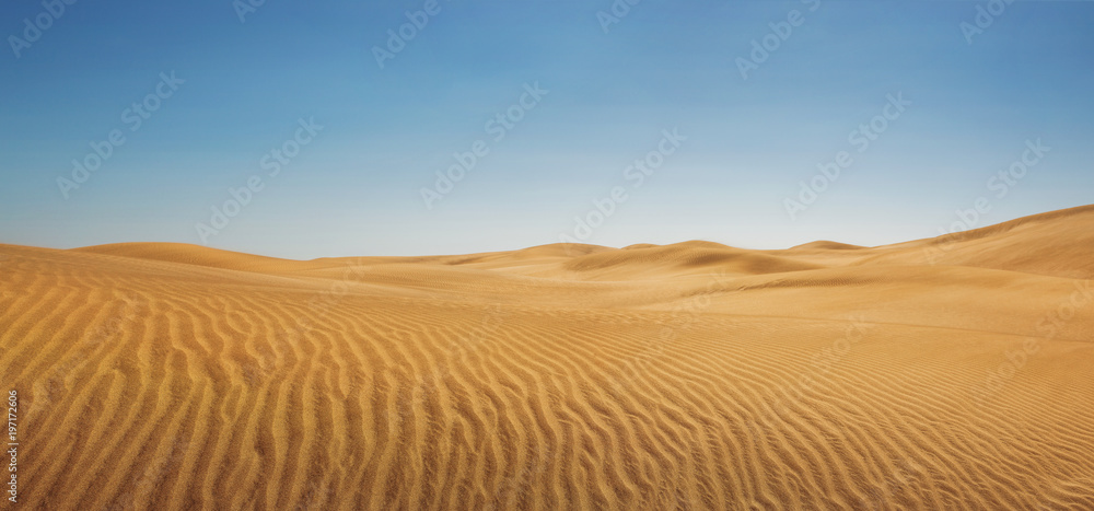 Fototapeta Dunes at empty desert, panoramic nature background with copy space