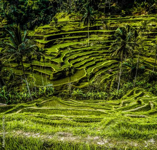Photo Stands Bali Bali Rice terraces