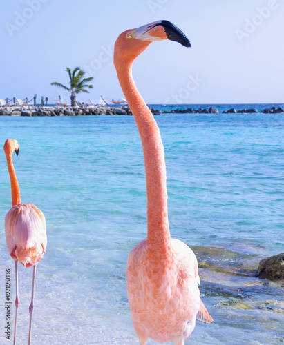 Beautiful flamingo on the beach