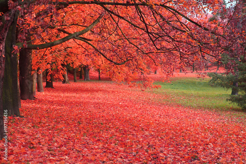 Deurstickers Rood autumn tree in the park