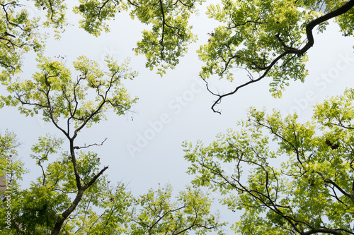 Foto op Canvas Bomen Top view with tree branch and blue sky